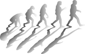 drawing with males depicting the evolution