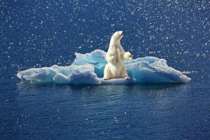polar bear on an ice rock