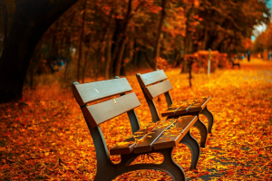 Two brown benches in a forest. There are autumn leaves on the ground.